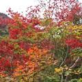 Photos: 龍山白倉川沿い紅葉