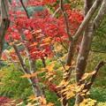 龍山白倉川沿い紅葉