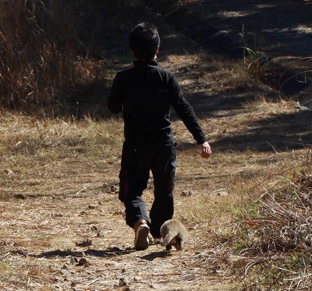 Photos: 昔ライダーHKさんへ富幕山ハクビシン散歩はリードなしでこんな感じです。。。