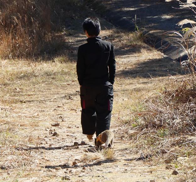 富幕山散歩中のハクビシン(白鼻芯) ジャコウネコ科