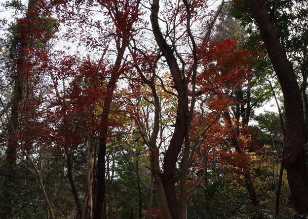 富幕山パノラマ紅葉