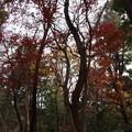 Photos: 富幕山パノラマ紅葉