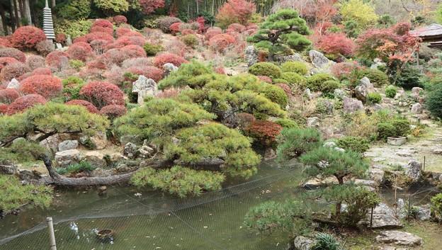 長楽寺「満天星、どうだん」の庭園は県の名勝として(龍潭寺(浜松市北区)、本興寺(湖西市)と並び)、遠州三名園のひとつに数えられています。