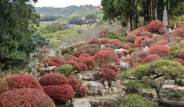 長楽寺「満天星、どうだん」の庭から長楽寺山号となった。光岩中央電柱左上