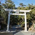 Photos: 遠州七不思議「桜が池」※「遠州地域、遠江(とおとうみ)」とは、静岡県浜松市を中心とした、東は大井川まで、西は湖西市まで、北は静岡県の県境までのエリアです。