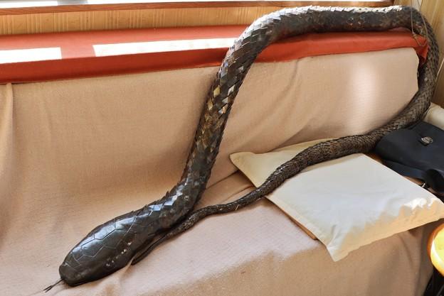 見つけました。冬眠から目覚めた鉄の干支ヘビ(巳)