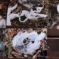 Photos: H)さんが撮ったシモバシラの写真