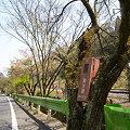 20090413高尾山ラン