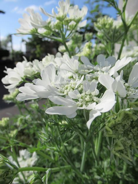 Photos: 白い花(汗)
