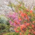 Photos: 花色々
