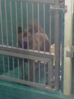 甲斐犬(6月2日、動物愛護センター)