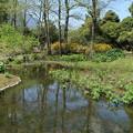 水生植物池 D3521