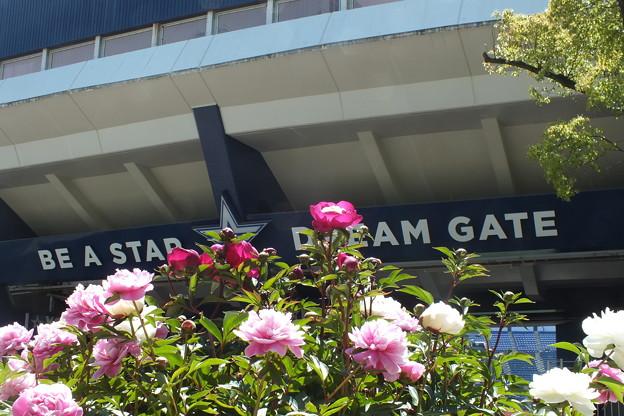 横浜スタジアム F9955