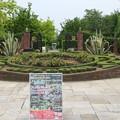 植物園_太田 D3774