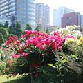 山下公園_横浜 D3944