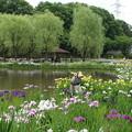 アヤメ祭り_公園 D4249