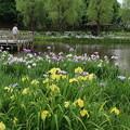アヤメ祭り_公園 D4250