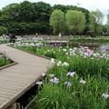 アヤメ祭り_公園 D4251