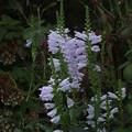 写真: 花壇の花 F0295