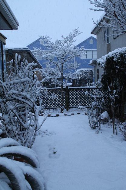 写真: 雪景色_守谷 D6375