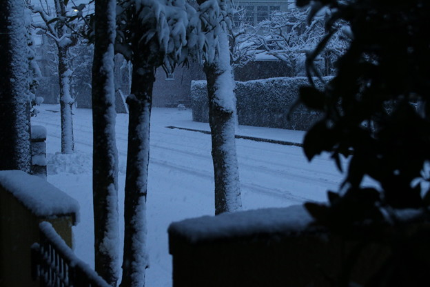 雪景色_守谷 D6385
