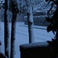 写真: 雪景色_守谷 D6385