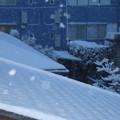 写真: 降り続く雪_守谷 D6390