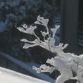 Photos: 雪景色_守谷 D6411