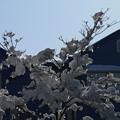 雪景色_守谷 D6417