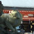 獅子_神社 F1705