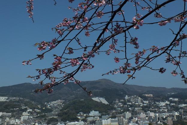 桜_熱海城 F1816