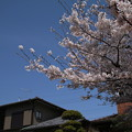 桜_遊歩道 D6893