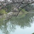 桜_福岡堰 F2098