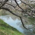 桜_福岡堰 F2106