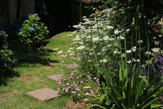お庭の花 D7694