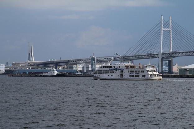 観光船_横浜 D8784