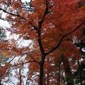 紅葉_箱根 D9148