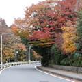 紅葉_箱根 D9156