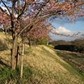 桜_堤防 D0596