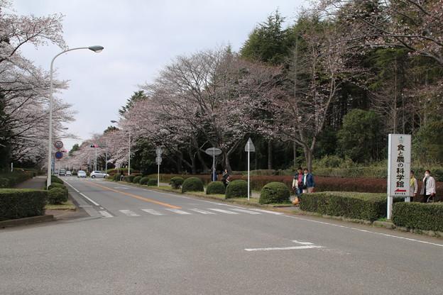 桜_学園 D0605