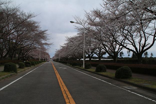 桜_学園 D0608