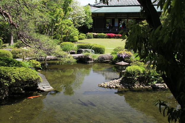 日本庭園_帝釈天  D1211