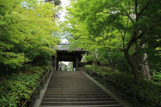 円覚寺_鎌倉 D1638