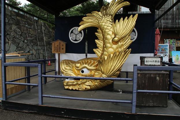 金鯱_名古屋城 D2326