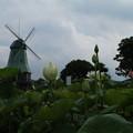 Photos: 風車と_公園 D2505