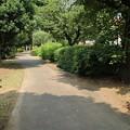 Photos: 散歩道 D2551
