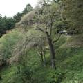 Photos: 中尊寺 D3394