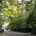 Photos: 武家屋敷通り_角館 D3405
