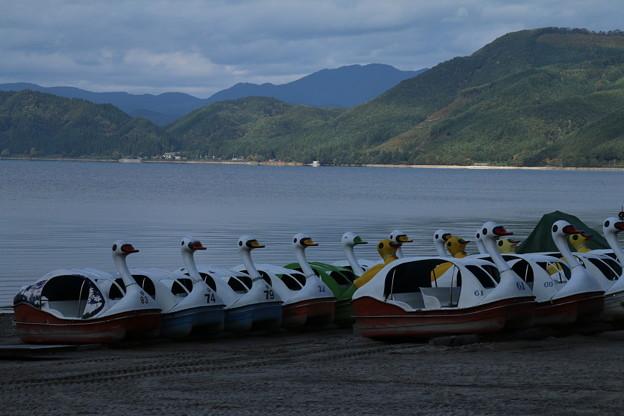スワン_田沢湖 D3429