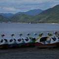 Photos: スワン_田沢湖 D3429